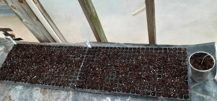 Tomato Seeds Started for 2021 and Sign up for our 2021 CSA!