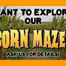 This Saturday, the Corn Maze will close at 5pm and Re-open at 6:30pm. for our Night Maze. The Market will not be open during the Night Maze, but we will be dipping ice cream.