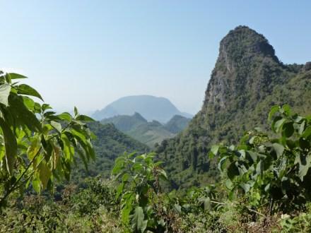 Aussicht aus dem Dschungel