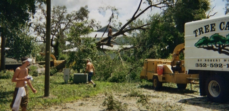 Tree Care removal in the early 1990s - Tree Care by Robert Miller