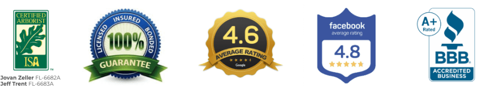 Best Tree Service proof with ISA-Certified Arborists and A+ from Better Business