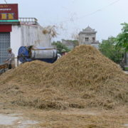 Battage du riz