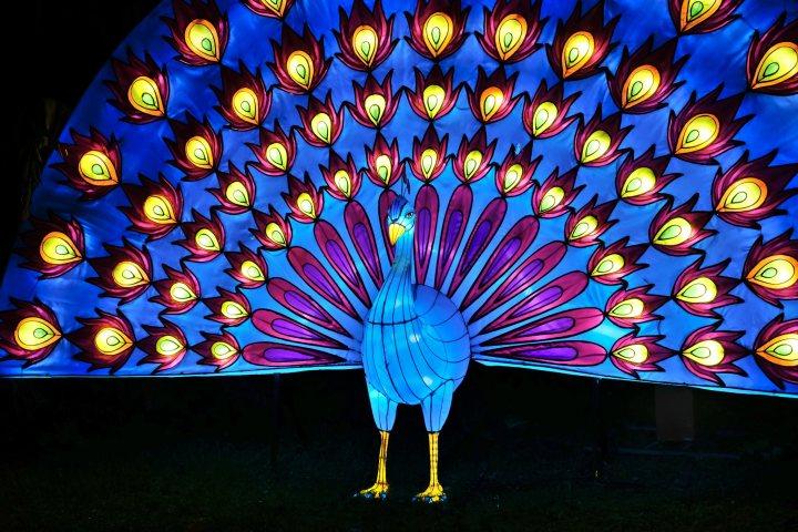 Illumination-JardinDesPlantes-0042