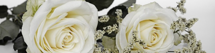 roses blanches mariage