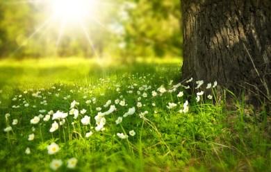 jardin fleurs arbre