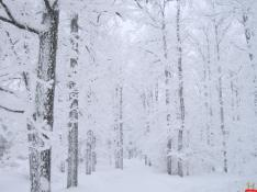 natural-white-snow-jungle