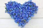 forget-me-not-flowers-heart