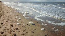 168 Beach looking towards the Mersey Estuary