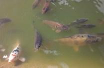 fish-at-burnby-april