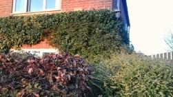 ivy-on-a-house