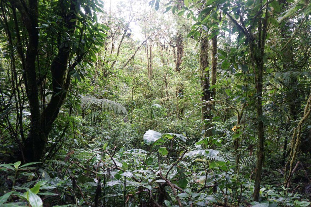 Costa Rica Trip – Live La Pura Vida