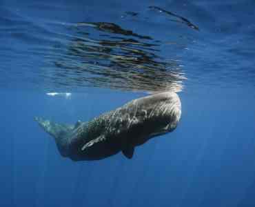 Whale, East Coast, Sri Lanka