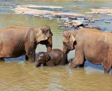 Elephants in Sri Lanka | Immersive Tours to Sri Lanka