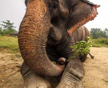 Elephant, India