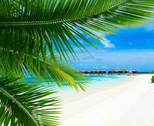 Sri Lanka and the Maldives Honeymoon, Luxury Holidays