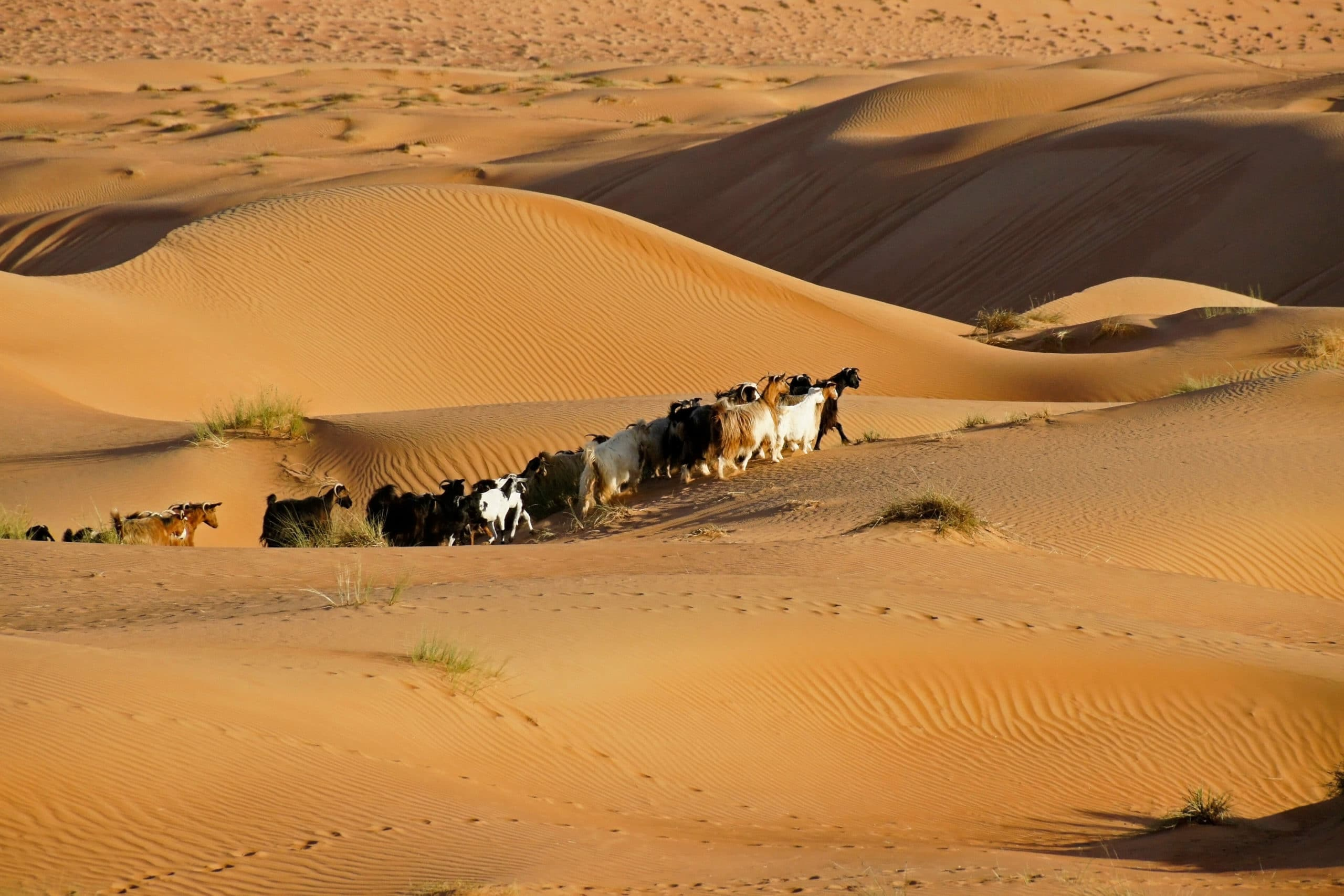 Wahiba Sands & Eastern Oman - Luxury Tour of Oman