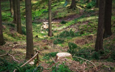 Clear Cutting vs Selective Tree Cutting