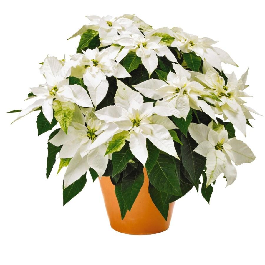 Princetta Pure White Image