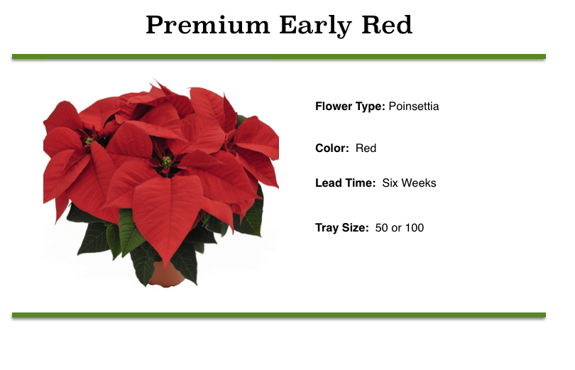 Premium Early Red