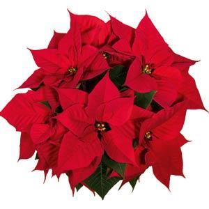 Christmas Eve Red Image