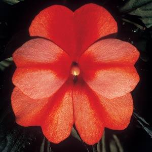 ColorPower™Orange Flame Image