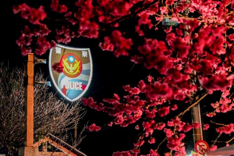 台中景點│全台最美的派出所。泰安派出所櫻花季