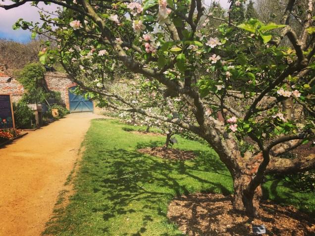 The stunning walled garden
