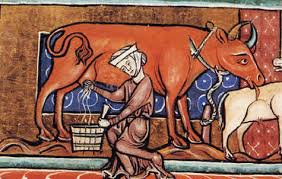 Medieval Dairy Maid Milking a Cow