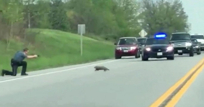 VIDEO Police Officer Shoots Aggressive Groundhog In Front of Traffic