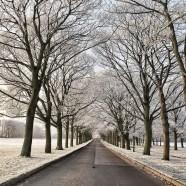 Ice Blossom Boulevard
