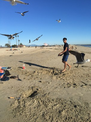 Attack of the seagulls