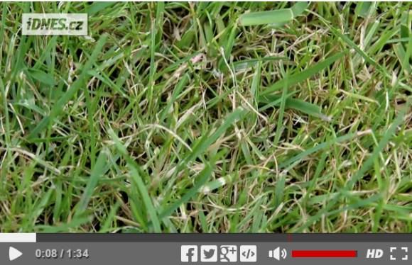 idnes-video-Swardman