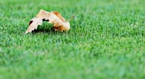 Pravidelná péče o trávník,má větší význam než jednorázové akce.