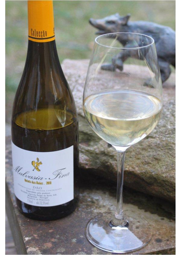 malvasia fina valge vein