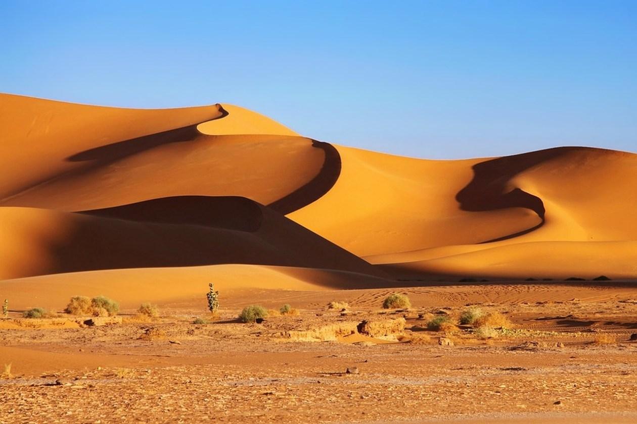 Argelia