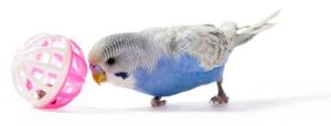 enriquecimiento ambiental aves