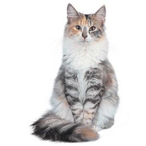 cuidados gatos esterilización