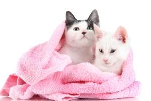 Cuidados gatos baños