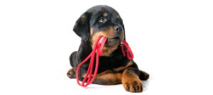 cuidados perros collar