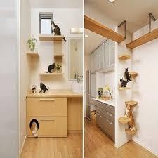 cuidados gatos juego