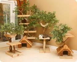 cuidados gatos enriquecimiento ambiental