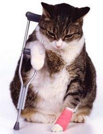 cuidados gatos salud