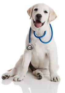Cuidados perros: Salud y medicina preventiva