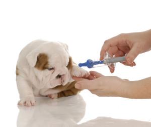 cuidados perros vacunacion