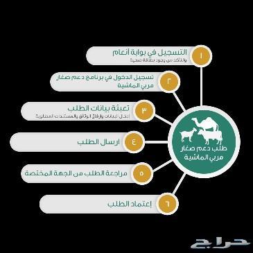 رقم وزارة الزراعة دعم المواشي