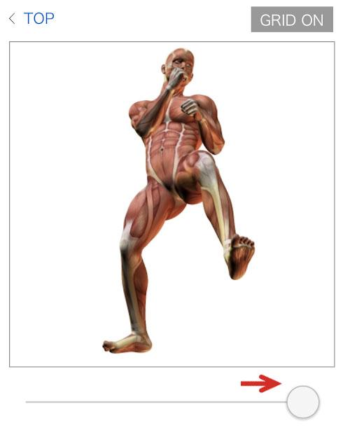 人体図静止画3
