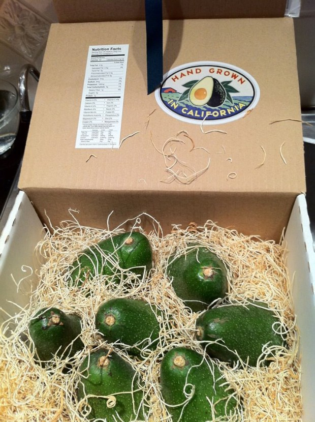 box of avocados from California Avocados Direct