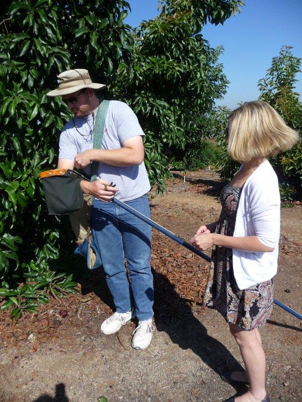 Gigi and Ben picking avocados