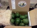 gift box of avocados