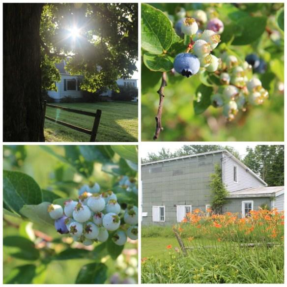 Vermont blueberries